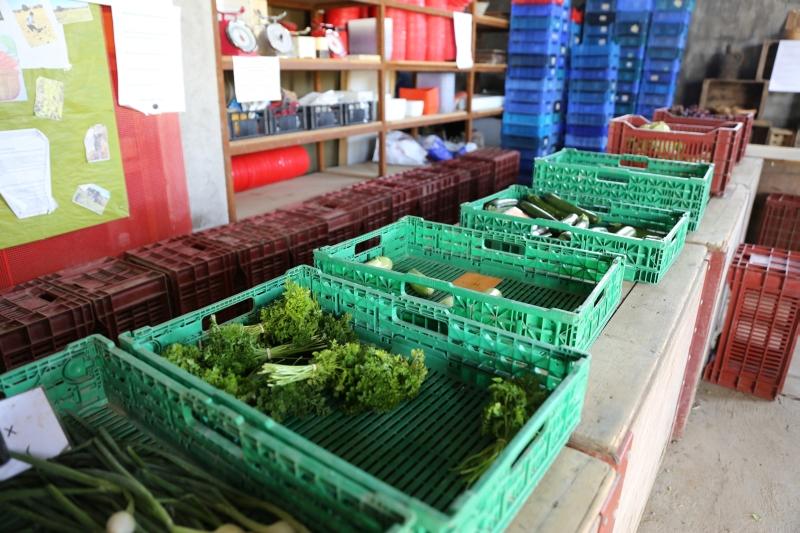 Quelques légumes n'ont pas été pris par les Amapiens