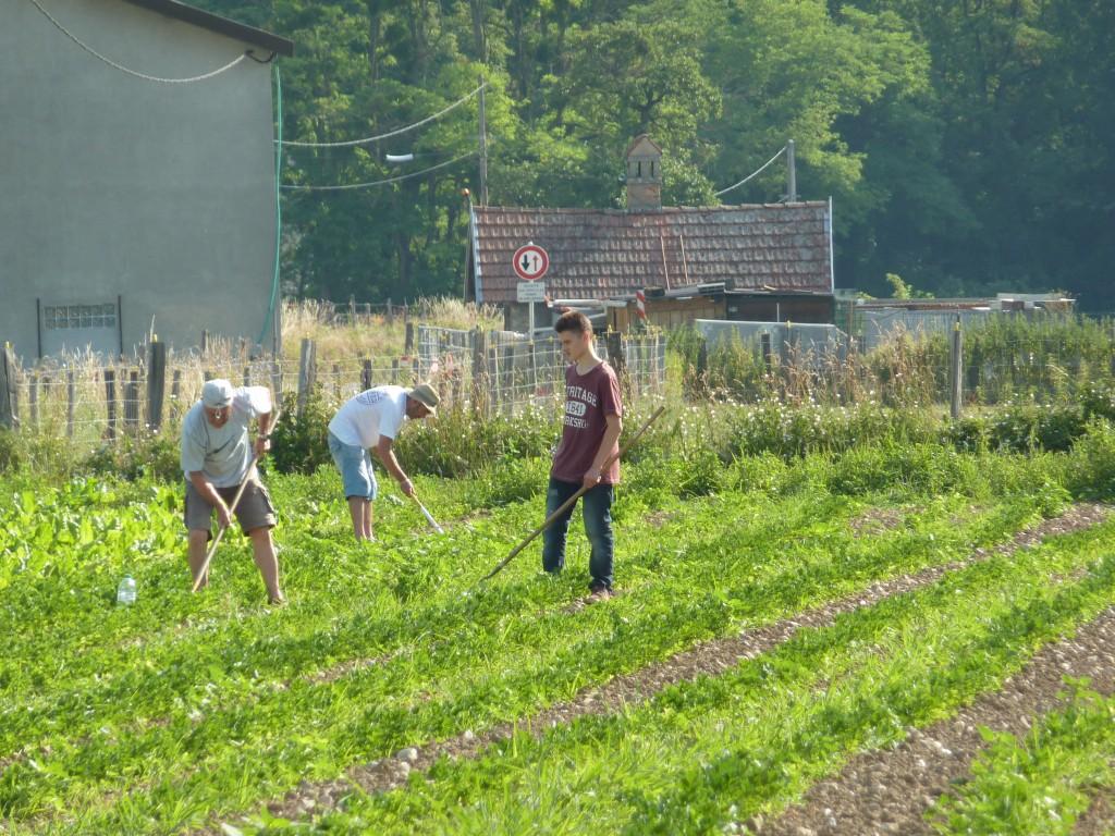 Binage dans les champs