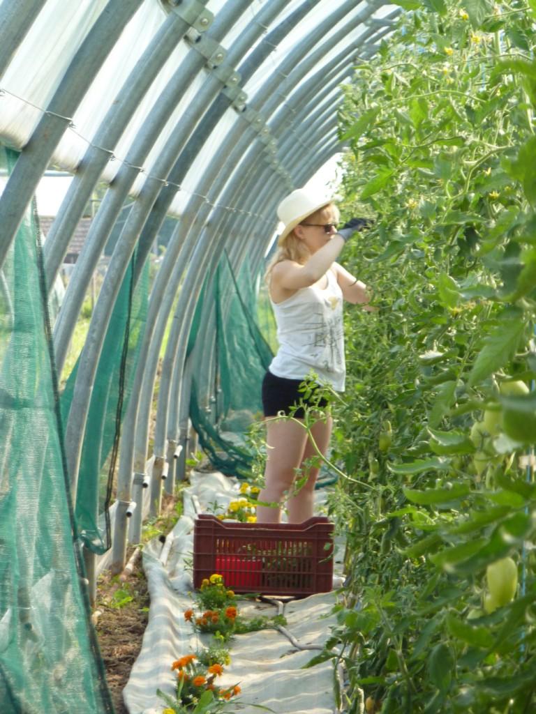 Elle enlève des gourmands aux tomates