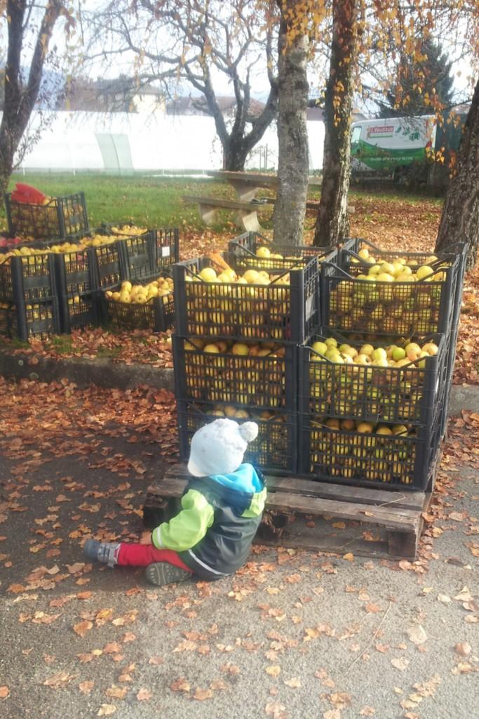Le gardien des pommes