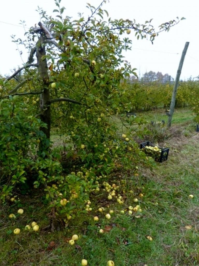 Pommes-1024