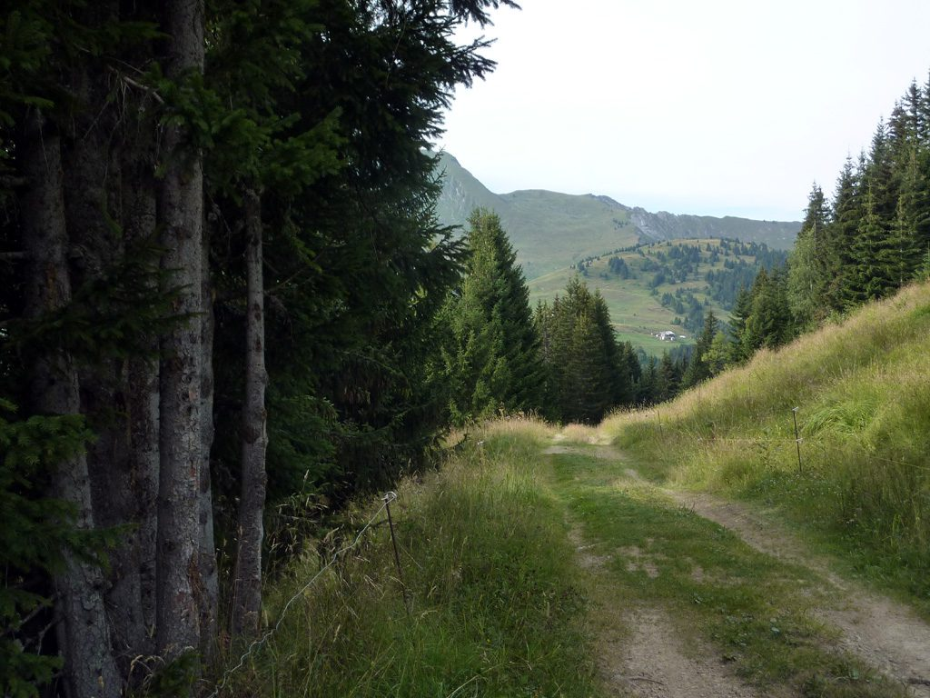 Vers l'alpage
